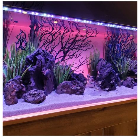 the background is awesome but would that be good on my fish's eyes? Tropical Fish Aquarium, Tropical Fish Tanks, Home Aquarium, Nature Aquarium, Aquarium Design, Aquarium Fish Tank, Jellyfish Aquarium, Aquarium Setup, Betta Fish Tank