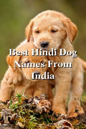 Funny Names For Dogs In Hindi : funny, names, hindi, Sally, Hindi, Names, India, Quotes,, Happy, Dogs,, Aggressive