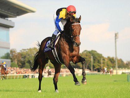 外国馬がいないジャパンc 実績薄いが成長著しい4歳馬2頭に期待 マカヒキ 馬 ジャパン