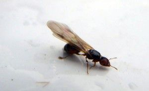 ants_flying_small