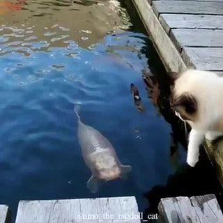 touch da fishy aww