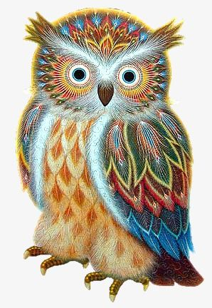 New colorful bird tattoo beauty 36 ideas