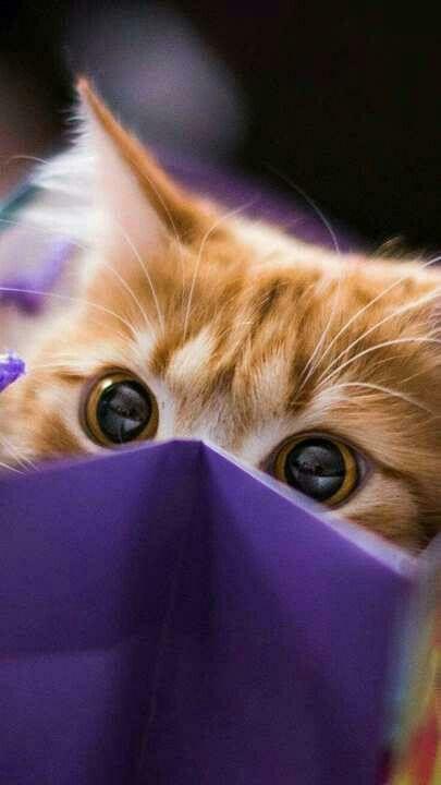 Kawaii Cat Petit Chat Trop Mignon Chat Trop Mignon Petit Chat