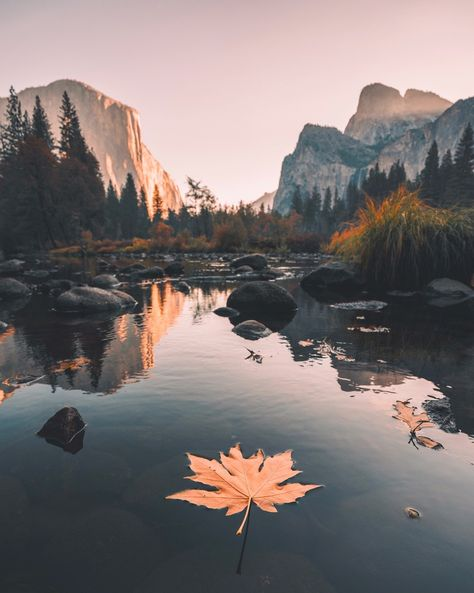"""""""Fall in Yosemite is a beautiful thing . - """"Fall in Yosemite is a beautiful thing . Beautiful World, Beautiful Places, Beautiful Pictures, Yosemite National Park, National Parks, Yosemite Park, Amazing Nature, Belle Photo, Beautiful Landscapes"""