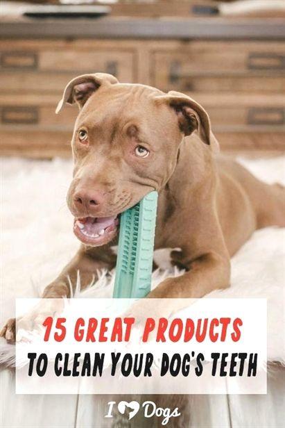 Dog Training Expo Dog Training Without Treats Dog Training