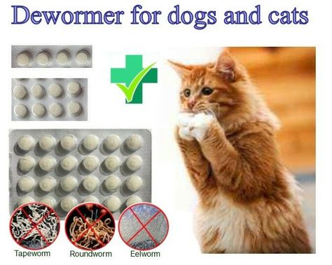 4 8 24tabs Dog Wormer Worming Tabs Dewormer Cat Deworming In English Effective Ad Wormer Worming Dog With Images Deworming Dogs Animal Treatment Cat Plants