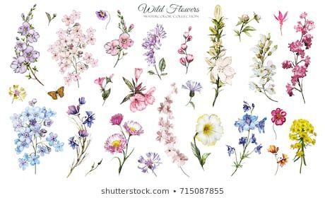 Big Set Watercolor Elements Wild Flowers Herbs Collection Wild Meadow Flowers Branches Illustration Isolated On Blumen Aquarell Wiesenblumen Blumen Wiese