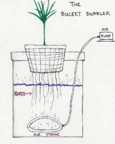Diagram of the hydroponics bucket bubbler system  | Gardning