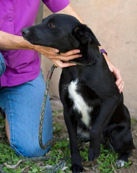 Adopt Florida On Collie Puppies Border Collie Puppies Border Collie