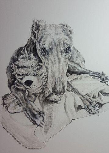 Archie Greyhound Colour Pencil Portrait Colored Pencil Portrait Dog Portrait Drawing Pencil Portrait