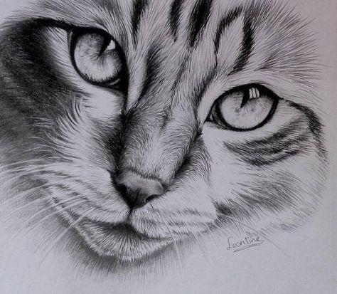 Cat Finished By Leontinevanvliet Mit Bildern Zeichnungen