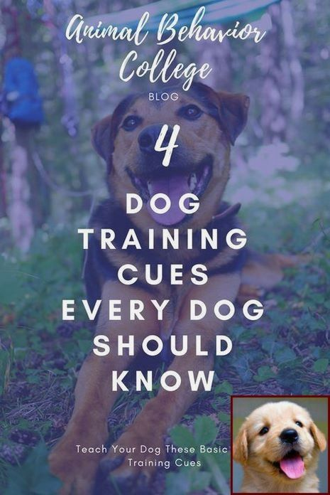 House Training A Puppy When You Work And Dog Behavior After