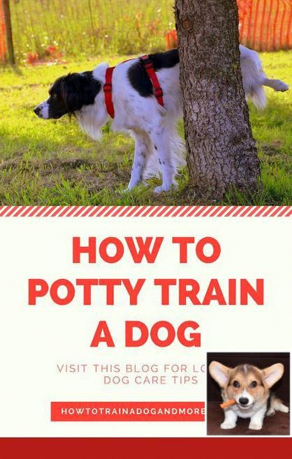 Potty Training Older Dogs Dogtraining And Puppy Dogs