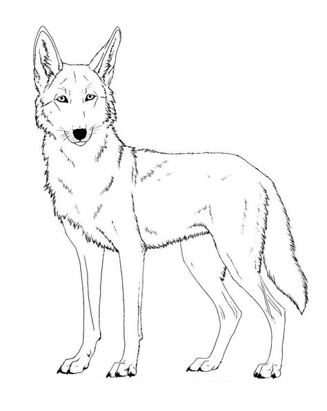 Printable Coyote Coloring Pages Coyote Coloring Pages Painting