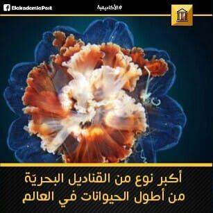 يعد قنديل عرف الأسد The Lion S Mane Jellyfish من أكبر أسماك قناديل البحر وواحدا من أطول الحيوانات في العالم سمي Poster Movie Posters Pandora Screenshot