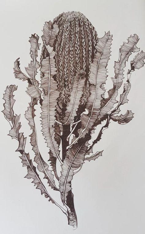 Banksia Menziesii by Jeanette Giroud