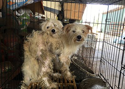 Houston Humane Society Hhs Rescues Nearly 300 Animals From Grimes