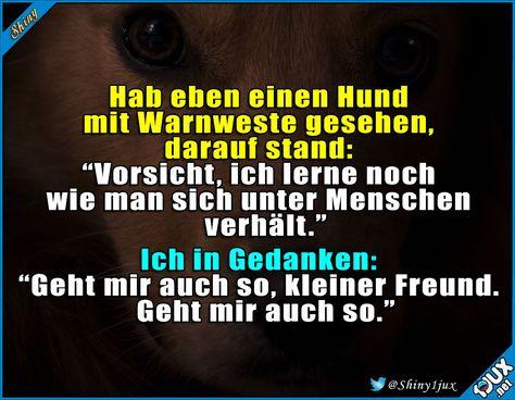 Gibt's die Weste auch für Menschen? #Hund #Hunde #Hundeliebe #Menschen #Sprüche