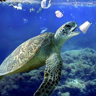 Think Before You Use Single Use Plastic On The Effects It Has On Our Wildlife And The Environment Plasti Plastic Pollution Water Pollution Save Planet Earth