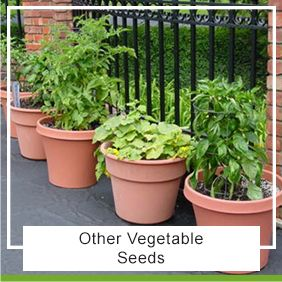 Vegetable Herb Seeds With Images Growing Vegetables In