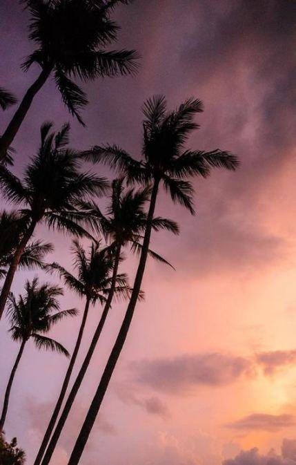 Wallpaper Sky Pink Palm Trees 44 Ideas Wallpaper Palm Trees Wallpaper Palm Trees Palm Tree Sunset