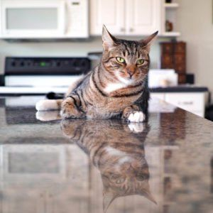 How To Keep Your Cat Off The Counter Top 10 Ways Kitchen Countertops Countertops Kitchen Design Diy