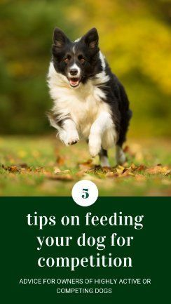 Feeding For Competition 5 Things Every Owner Should Know Dog