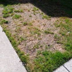 How To Treat Lawn Fungus Grass Patch Lawn Treatment Lawn Care