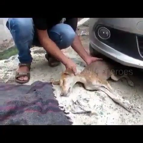 Please watch till end. Earth need more humans like them. Please follow Animals Board for more videos
