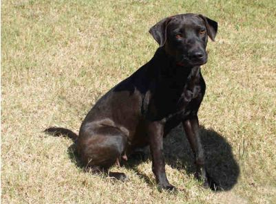 Tuesday S Tails 31 Opt To Adopt Dog Adoption Beautiful Dogs Savannah Chat