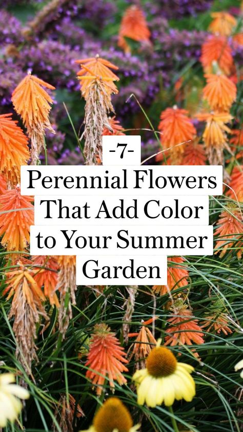 -7- Perennial Flowers That Add Color to Your Summer Garden