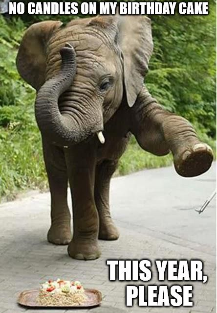 50 Hilarious Happy Birthday Memes To Give Them A Laugh Happy Birthday Elephant Funny Happy Birthday Meme Funny Wishes