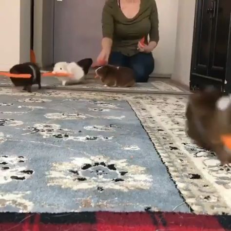 Funny Animals – Funnyfoto