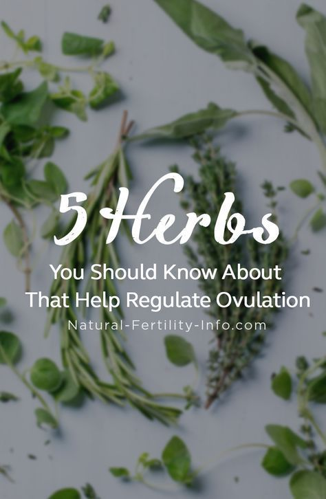 5 Herbs You Should Know About That Help Regulate Ovulation