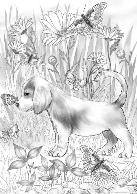 Pin On Dog