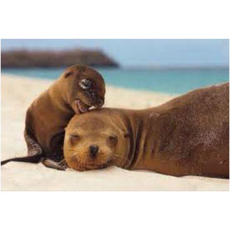 Baby Phoque seal seal | pets | bébés animaux, animaux, bébé phoque