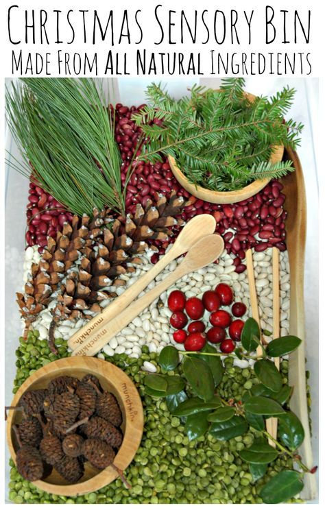 All Natural Christmas Sensory Bin. Made with materials from nature (and the grocery store) with no dying needed. Great fun for kids! Maybe no legumes for toddlers.
