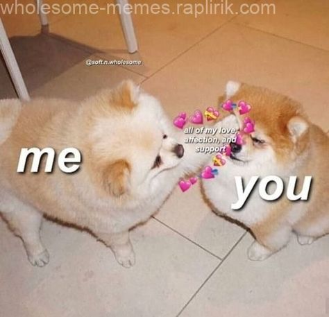 The post  appeared first on Wholesome Memes.