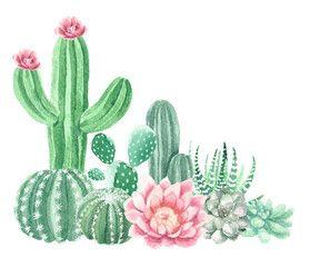 Watercolor Cactus And Succulents Cactus Illustration Cactus