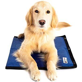 Pin On Dog Ideas
