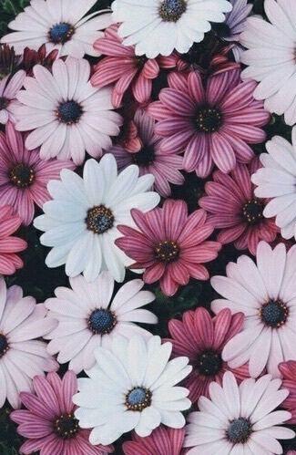 52 Trendy flowers wallpaper black and white