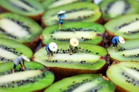 Little People on kiwi's. Also seen as rice fields in this picture. (re) Pinned by storyplanter.