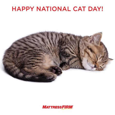 Don T Get Your Whiskers In A Knot Celebrate Nationalcatday And Unwind With The Purrrfect Cat Nap In 2020 National Cat Day Cat Day Cat Nap