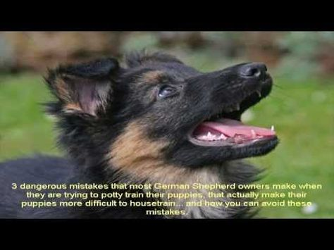 How To Train A German Shepherd Puppy Not To Bite Guide Youtube