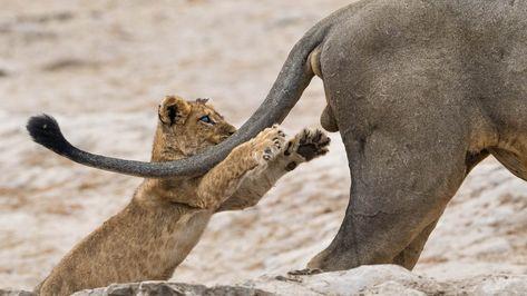 2019 Comedy Wildlife Photography Awards: Animals show their