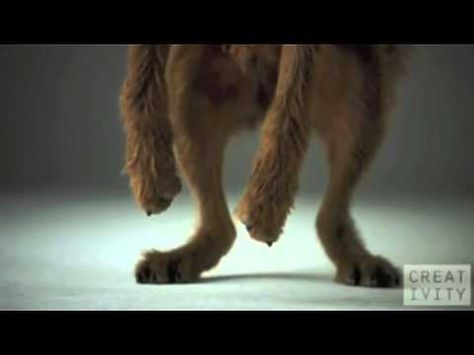 Dogs In Slow Motion To Trap Music 1 Pedigree Dog