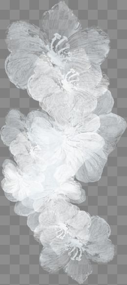 Transparent Flower Clipart Black And White Png
