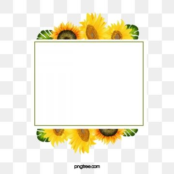 Material Do Girassol Girassol Clipart Girassol Flor Imagem Png E Psd Para Download Gratuito Flower Png Images Sunflower Clipart Clip Art Borders