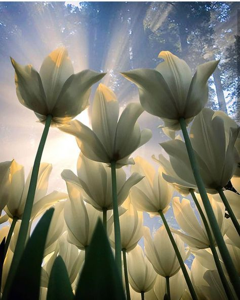 Pin By Lisa Collins On Wildflowers Flowers Photography Beautiful Flowers Tulips