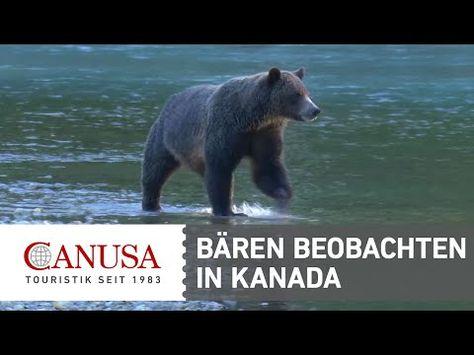 Video Vancouver Island: Grizzlybären in Kanada beobachten | traveLink.